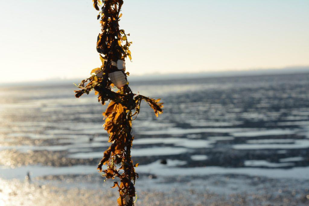smerdiek sintmaartensdijk tholen strand oester eb schelpen wrakhout zeewier