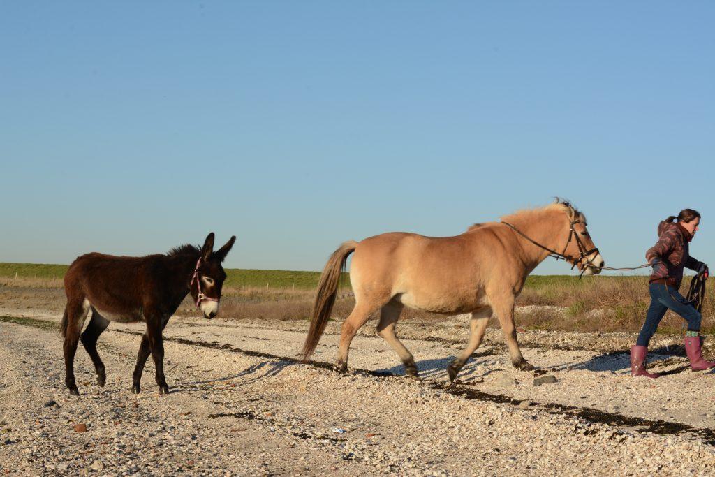 smerdiek sintmaartensdijk tholen strand oester eb schelpen wrakhout paard ezel