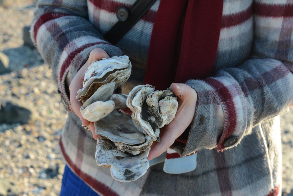 smerdiek sintmaartensdijk tholen strand oester eb schelpen wrakhout