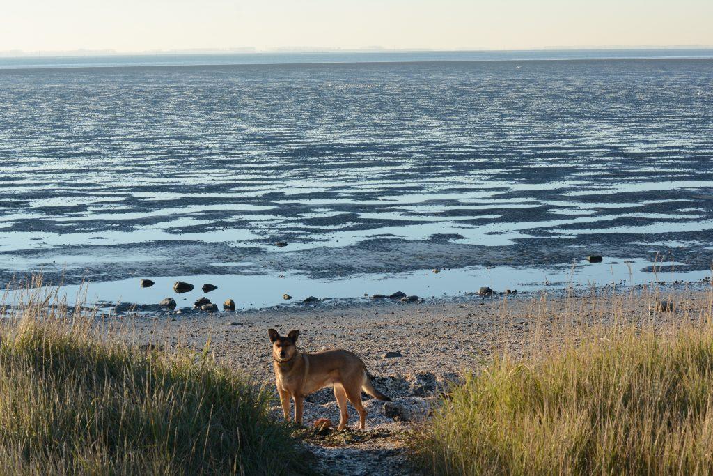 smerdiek sintmaartensdijk tholen strand oester eb schelpen wrakhout hond